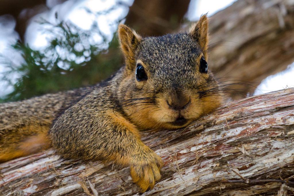 Curious Squirrels